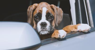 Votre chien est malade en voiture?